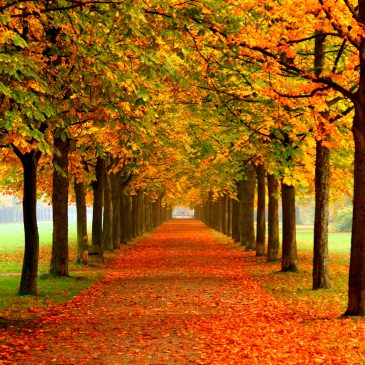 3 Reasons Why We Subconsciously Love Autumn